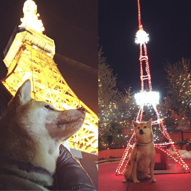 dog by Tokyo Tower