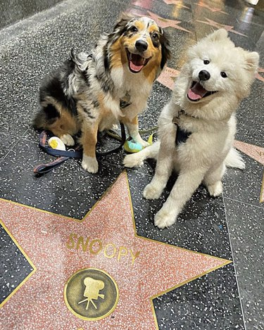 dogs on Hollywood walk of fame