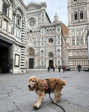 dog in Florence, Italy