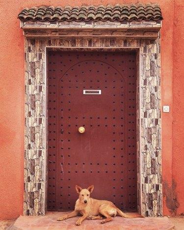 dog in Morocco