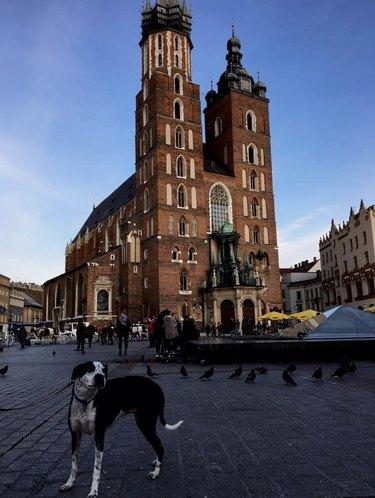dog in Krakow, Poland
