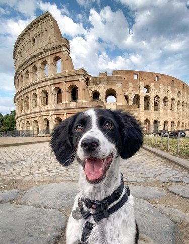 dog in front of colosseum in Rome