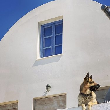 dog in Greece by white and blue building