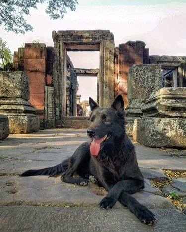 dog in Thailand near old temple ruins