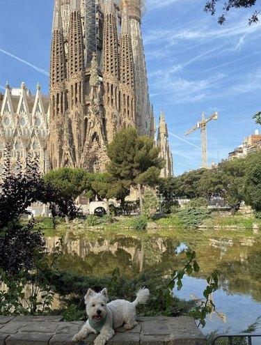 dog in Barcelona
