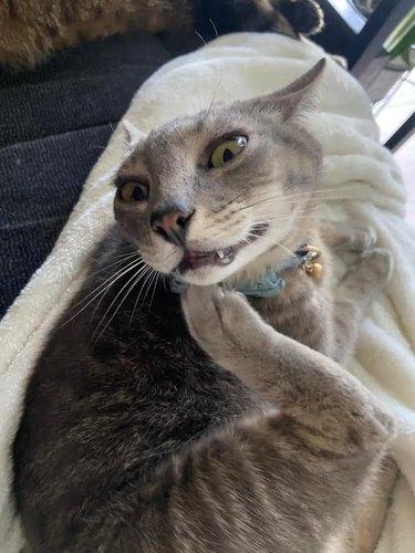 cat is not graceful