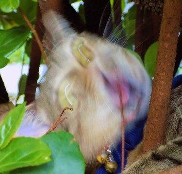 blurry photo of cat screaming