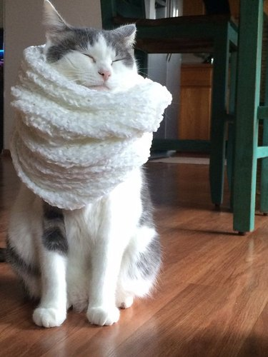 A white and grey cat wearing a white scarf and looking pleased.