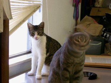 cat phase shifts back into this dimension while other cat looks on