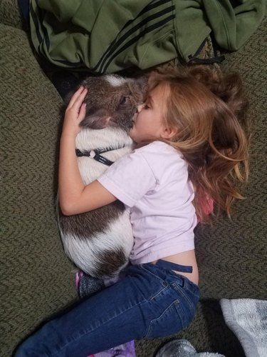 A little girl cuddling and kissing a pig while lying on a bed.