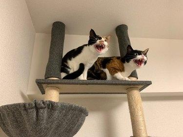 cats protest vacuum cleaner