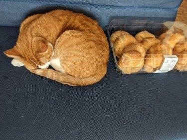 orange cat sleeps next to croissants