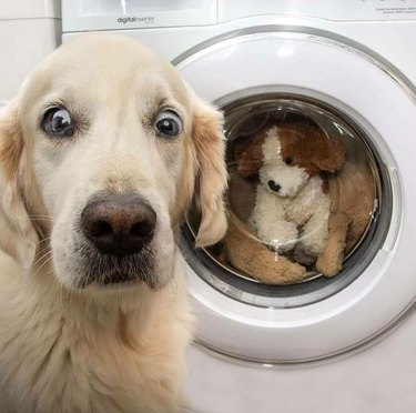 dog shocked to see stuffed animal in washer