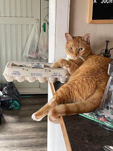 cat threatens to push eggs off countertop