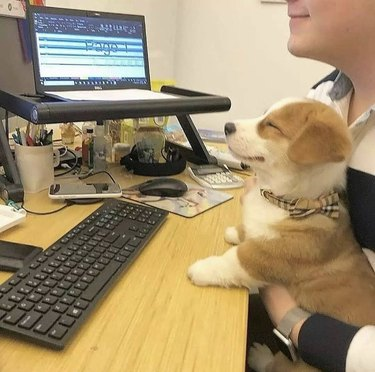 dog stares at computer screen