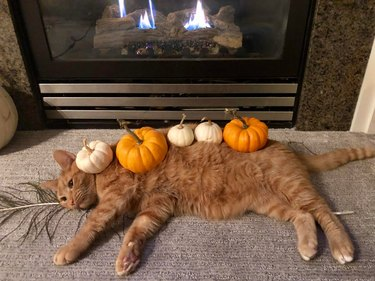 Cat covered in decorative gourds laying in front of fireplace
