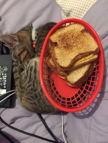 Cat curled up next to laptop charger with basket of grilled cheese sandwiches on its back