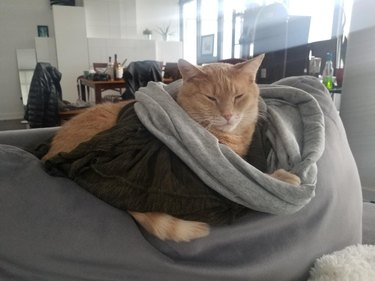 Cat sleeping under sweater and scarf