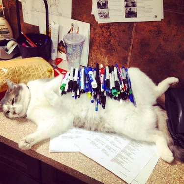 Cat laying on desk with 99 pens piled on her stomach