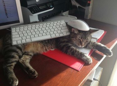 Cat sleeping on desk with keyboard on body and mouse on head