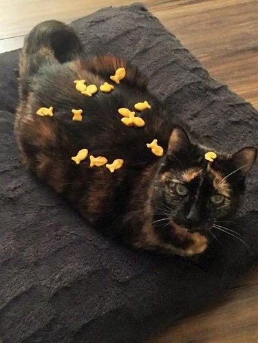 Cat covered in goldfish crackers