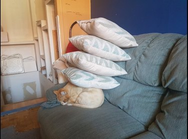 Cat curled up on sofa with four throw pillows piled on top of it