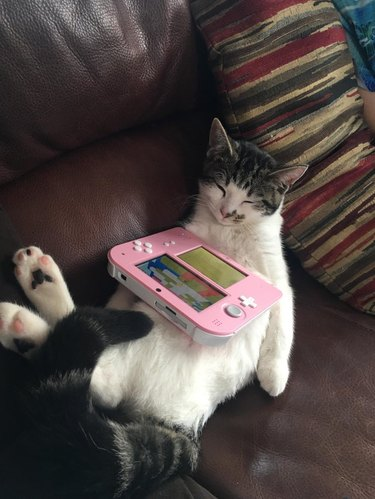 Cat sleeping on its back with 2DS game console on its stomach