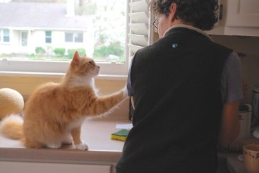 An orange cat reaches their paw out to touch their human's shoulder, looking concerned.