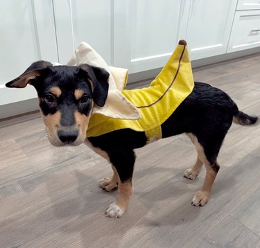 dog in banana costume
