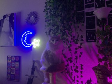 cat with powerful aura