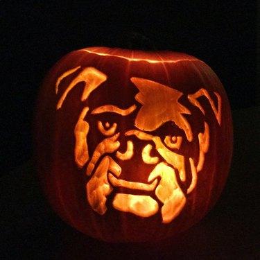 closeup of bulldog pumpkin