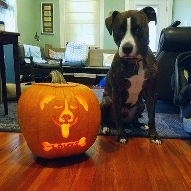 dog poses with halloween pumpkin