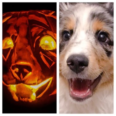 side-by-side view of dog and dog-o-lantern