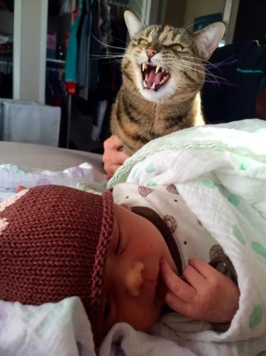 A brown striped cat appears to yell angrily over an adorable newborn baby.