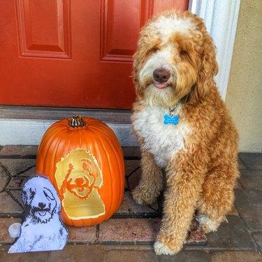 dog sits next to pumpkin
