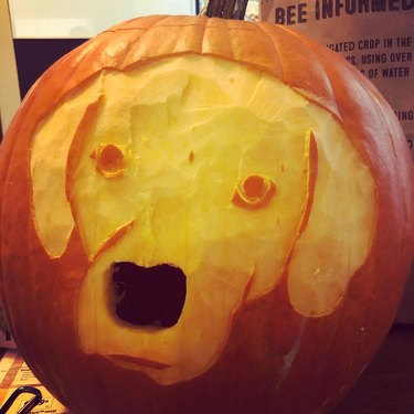 dog's face carved into pumpkin
