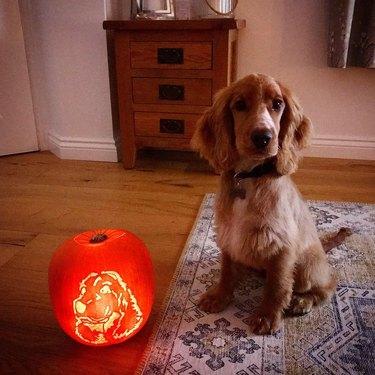 dog sits next to dog-o-lantern