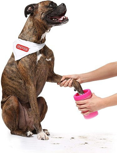 Dexas Mudbuster paw cleaner