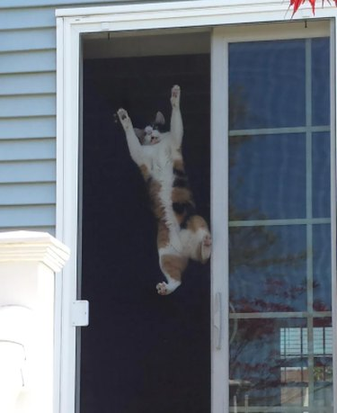 A calico cat clings to a screen door, looking like they are trying to escape.