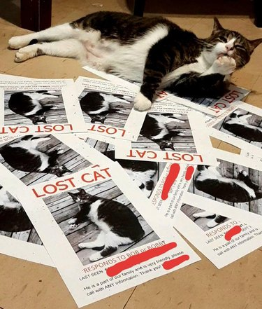 """A brown and white cat casually licking their paw while lying amongst a pile of """"lost cat"""" posters featuring themselves."""