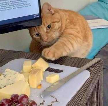 An orange striped cat reaches for a cheese plate.
