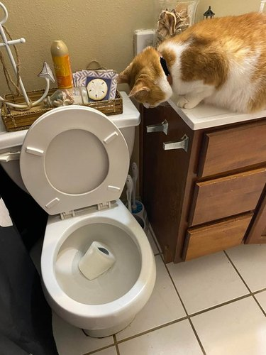 An orange cat looks down into a toilet bowl, into which they have just knocked an entire roll of toilet paper.