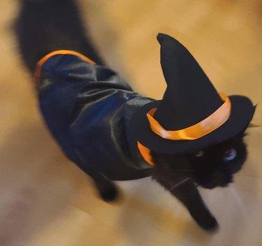 black cat in witch costume