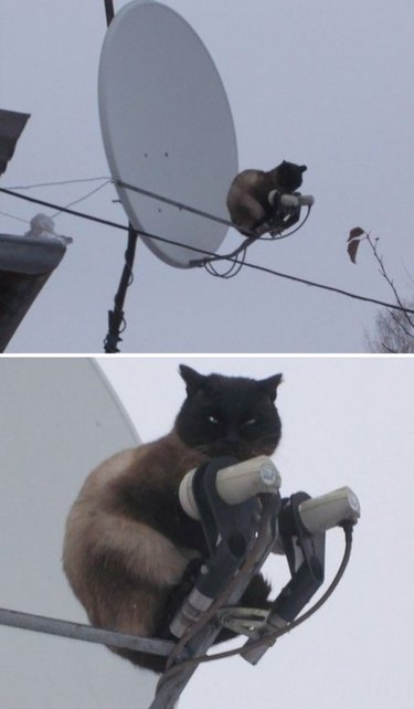 A brown cat sits on a satellite dish and looks grumpily at the camera.