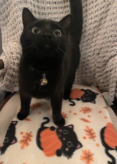 black cat on blanket with black cat pattern