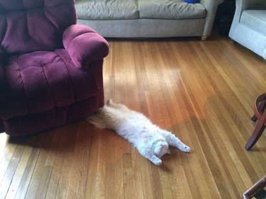 A fluffy white cat sprawled out on the floor on their back with their eyes closed.