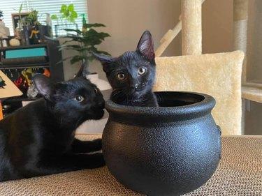black cat sitting in black cauldron