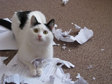 A black and white cat lying on top of some important-looking papers that they have just destroyed.