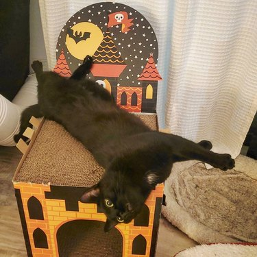 black cat is too tall for Halloween pop-up castle