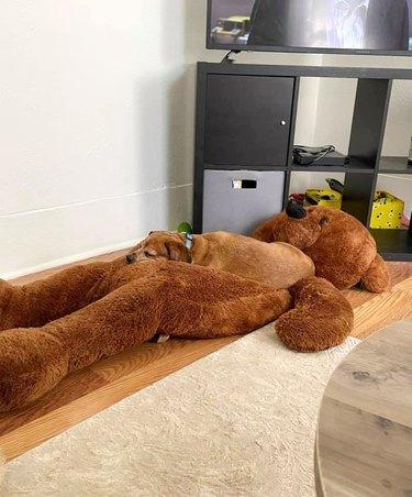 brown dog sleeps on stuffed brown bear